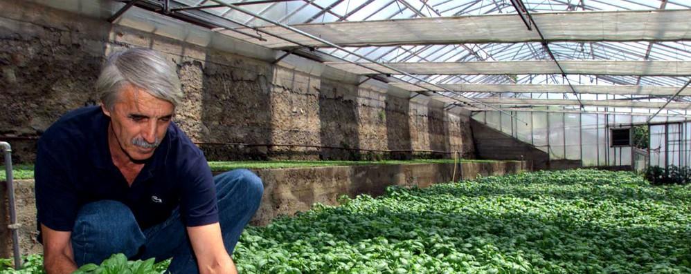 Tagli ad agricoltura Ue costerebbero a Italia 2,7 miliardi