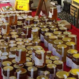 Scampato pericolo, il clima alpino salva il nostro miele