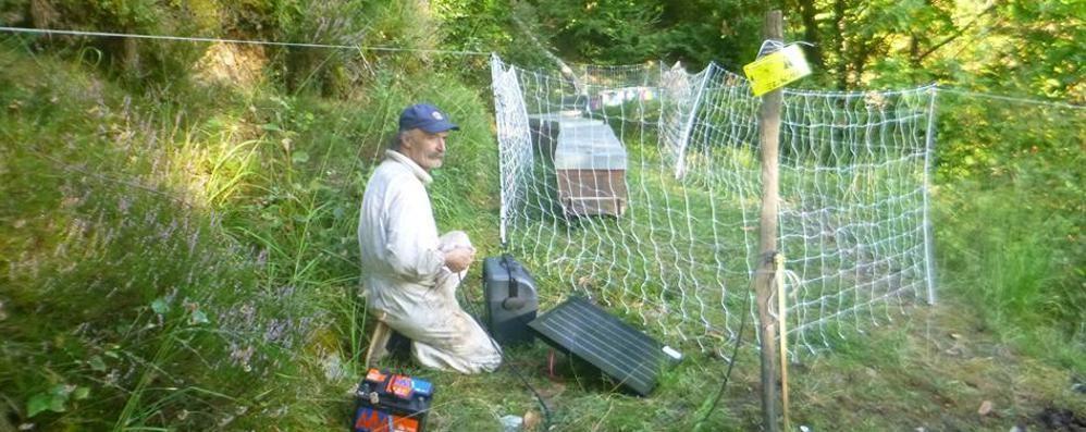 Danni da orso? «La via da seguire è installare recinti»