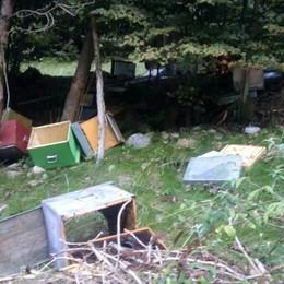 Nuova scorpacciata di miele  L'orso è arrivato in Val Fontana