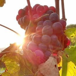 Wine Festival, a Chiavenna «tutta la bellezza in un bicchiere»