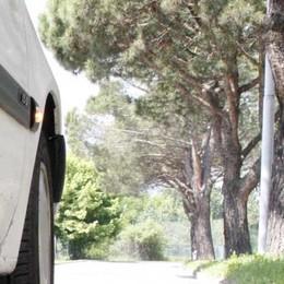 Sicurezza in strada a Sondrio, al via l'abbattimento dei pini marittimi