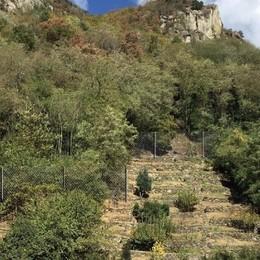 Il versante di Bette a Chiavenna, trenta metri di reti per bloccare i massi