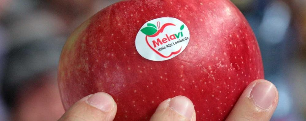 Melavì firma con Mautino: «Torte con le nostre mele»