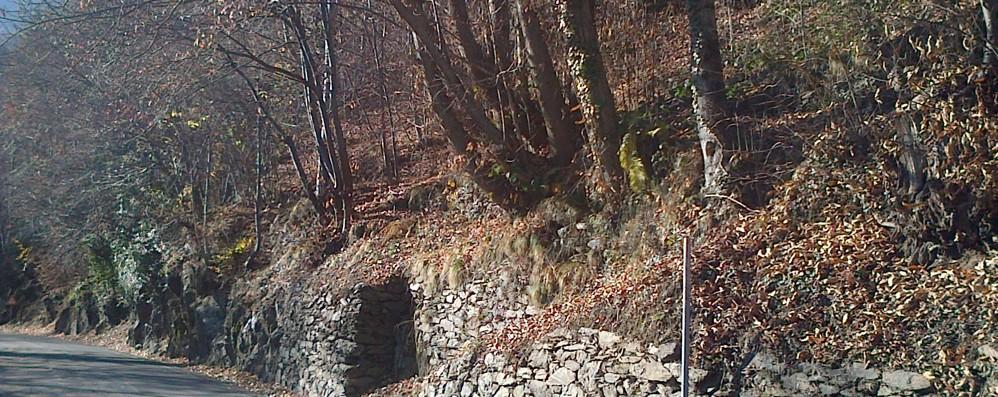 Alberi minacciano la strada, il Comune di Sondrio cerca boscaioli