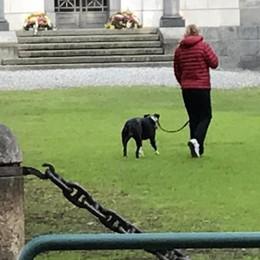La stretta sui cani: poche multe e tanta ostinazione