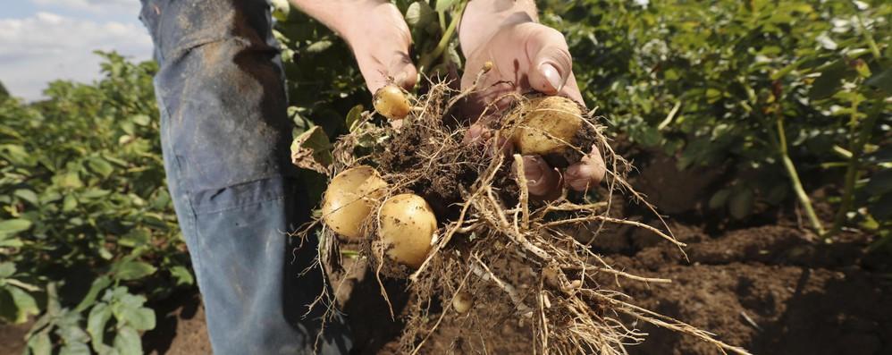Da Ue 467 milioni della riserva di crisi indietro agli agricoltori