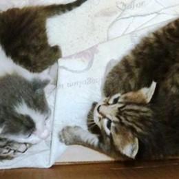 Lombardia: obbligo  di microchip per i gatti