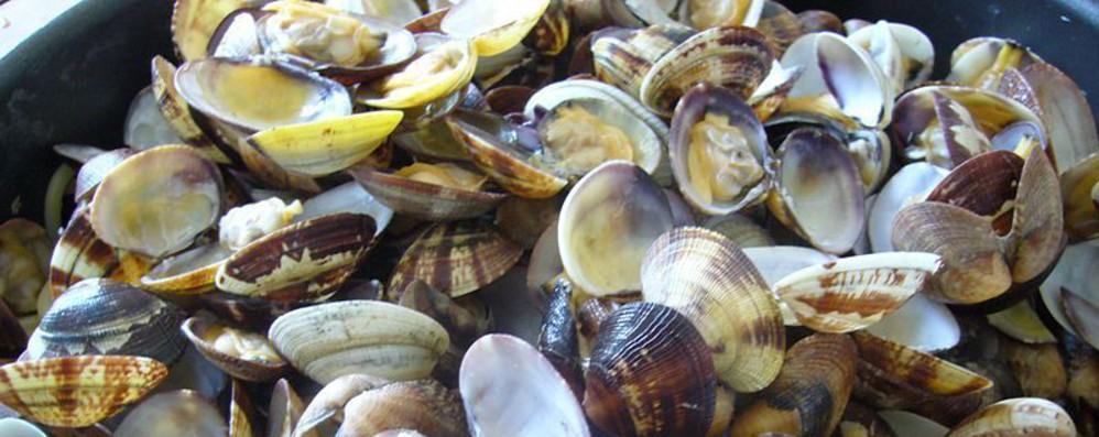 Via libera Europarlamento a deroga pesca vongole Adriatico