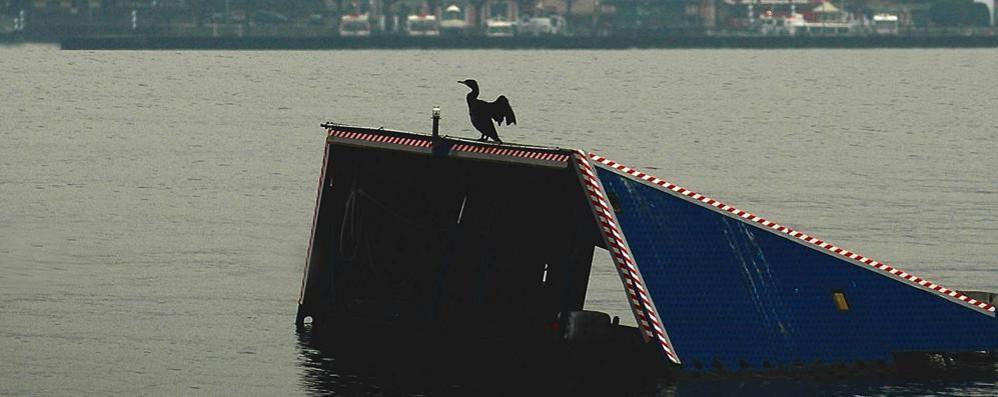 Menaggio, la guerra ai cormorani  «Mangiate 1.200 tonnellate di pesce»