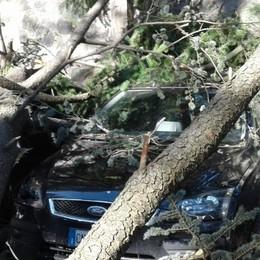 Il vento stacca i rami, due auto schiacciate a Sondalo
