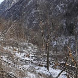 Valfontana, la bonifica a metà marzo  Al lavoro su 40 ettari di bosco devastato