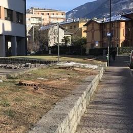 A Sondrio tagliati i pini in via Trento