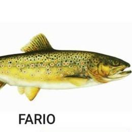 Una app per la pesca, la stagione parte nel segno dell'hi tech