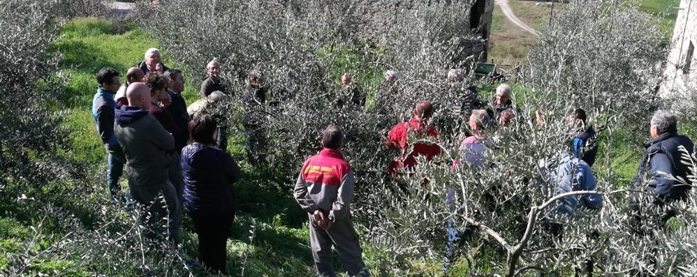«Con altri 890 ulivi si salvano 2,5 ettari»