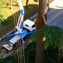 «Troppo pericoloso». Sondrio: abbattuto in via Cesura lo storico, grande cedro