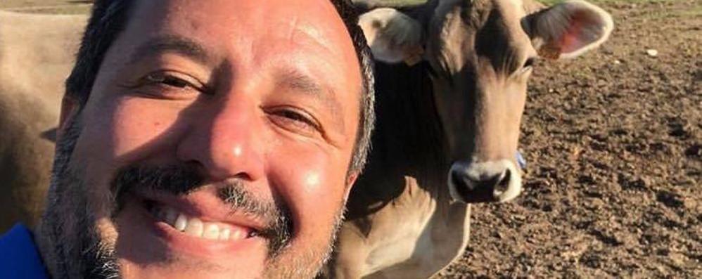 Salvini in Valtellina con la sua mucca