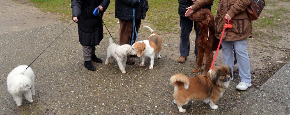 Cani, vero amore: uno ogni 6 residenti