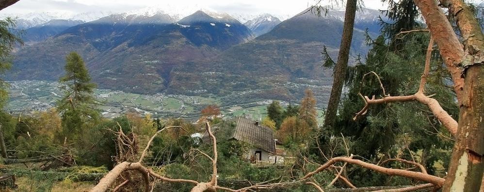 Foreste in Valle, la salute è precaria