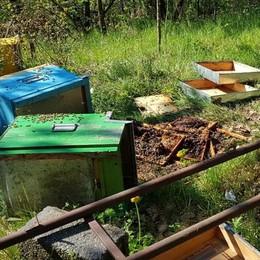 Aprica, ultime scorribande dell'orso prima di migrare in Trentino