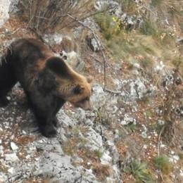 «Faccia a faccia con l'orso, che paura»