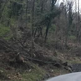Ripristino danni nei boschi, la Valmalenco lancia l'Sos