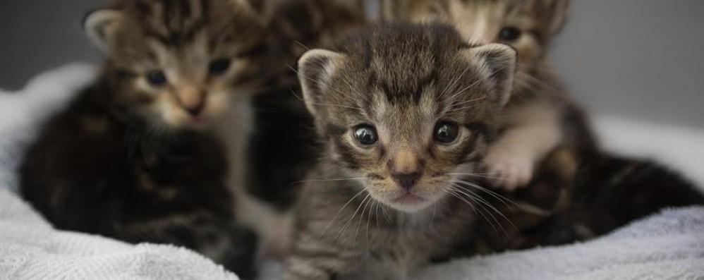 «Congelò gattina nel freezer»  La presunta killer dei gatti  a processo il 14 maggio