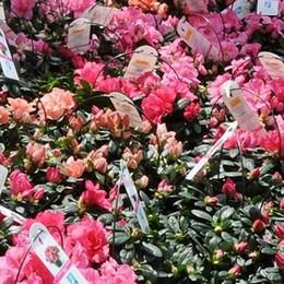 Festa della mamma, i colori della ricerca per un dono speciale