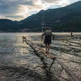 Sua maestà l'agone  Per i pescatori è già un successo