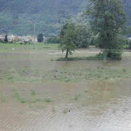 Piogge e danni all'agricoltura  Garanzie alle aziende locali