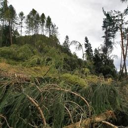 Fusione fra i tre Consorzi forestali  «L'idea è buona, ma forse prematura»