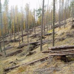 «Troppe calamità sul territorio  Serve un unico Consorzio forestale»