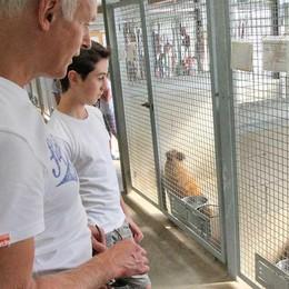 Enpa, bilancio positivo, tra cani e gatti più di trecento adozioni