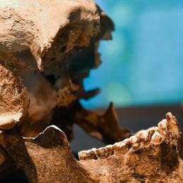 Il cranio misterioso è di Plinio il Vecchio  «Ci sono le prove dopo due anni di studi»
