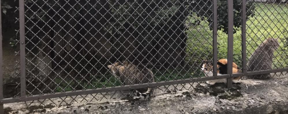 Colonie di gatti, la guerra per il cibo  «I privati ci impediscono di nutrirli»