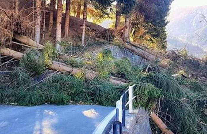 Tartano maltempo vento alberi sradicati strada interrotta