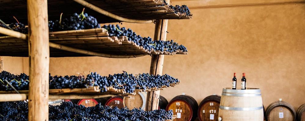 Dazi: da eurodeputati ok a proroga delle misure di promozione del vino