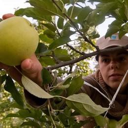 Le associazioni agricole  «Subito i voucher  per lavorare subito»