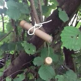 Lanciate le vespe samurai  che salveranno i meleti  «Uccidono le cimici»