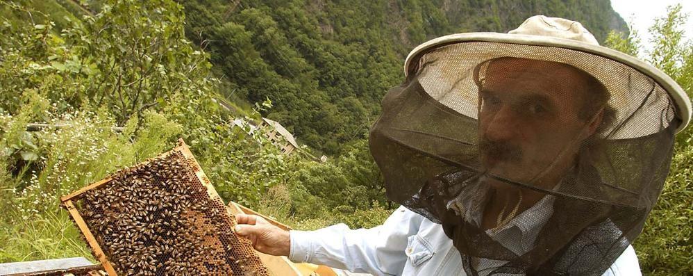 Il mercato del miele  sta riprendendo bene  «La qualità è richiesta»