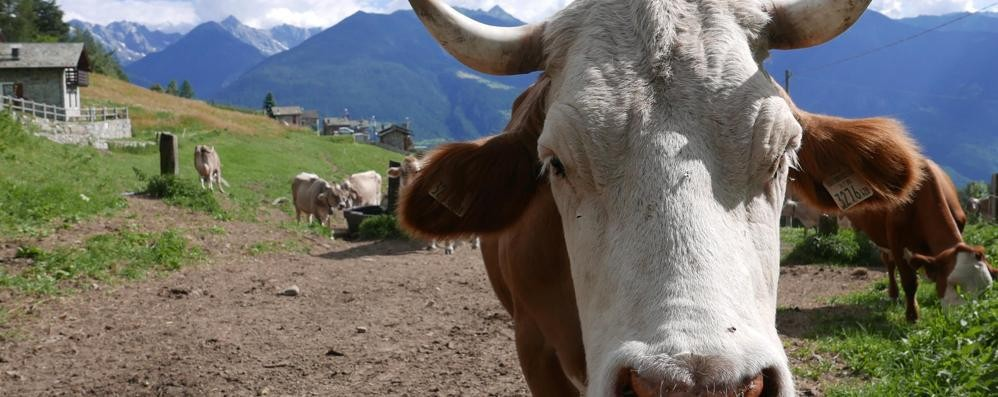 Agriturismi, filiera al collasso  Non si sa dove mettere i prodotti