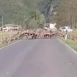 Al Pian di Spagna   210 cervi sono di troppo