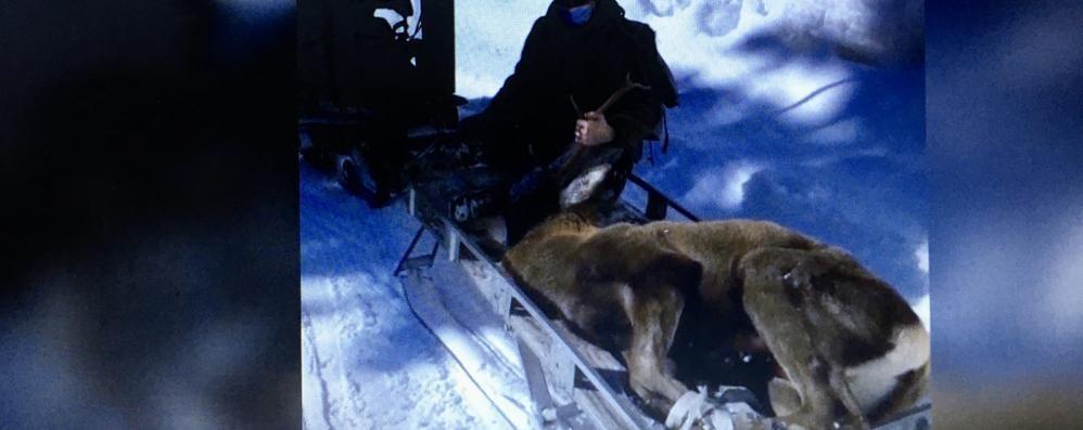 Animali selvatici  «Periodo difficile  Non dategli cibo»