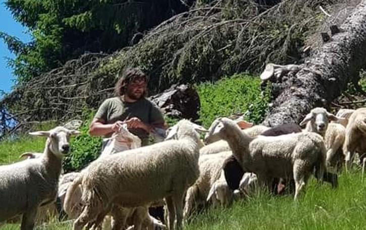 Valfontana, ha vinto il lupo  «Ha sbranato 40 pecore  Siamo dovuti scappare»