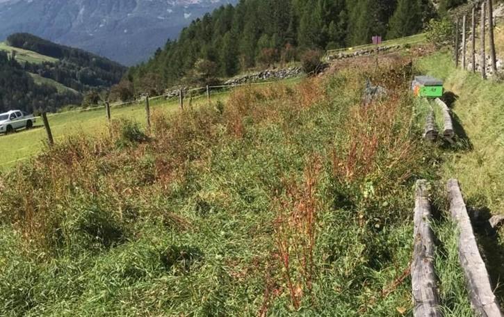 I cervi fanno danni  Denuncia in Valfurva